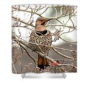 Flicker - Alabama State Bird - Attention Shower Curtain