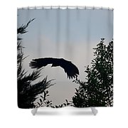 Flight Of The Black Crow Shower Curtain