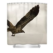Flight Of The Brown Kite V7 Shower Curtain