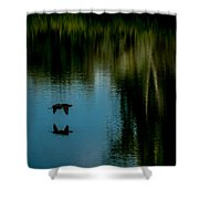 Flight Of The Cormorant Shower Curtain