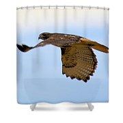 Flight Of The Hawk Shower Curtain