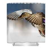 Flight Of The Mallard Shower Curtain