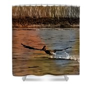 Flight Of The Pelican-featured In Wildlife-newbies And Comfortable Art Groups Shower Curtain
