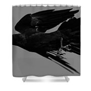 Flight Of The Raven Shower Curtain