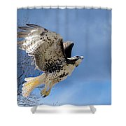 Flight Of The Red Tail Shower Curtain