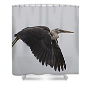 Flight Of The White Necked Heron Shower Curtain