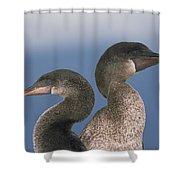 Flightless Cormorant Pair Galapagos Shower Curtain