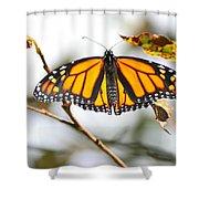 Flirting Monarch Shower Curtain