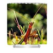 Flirty Mantis Shower Curtain