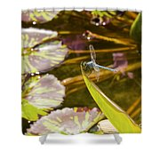 Flittering Dragonfly Shower Curtain