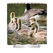 Floating Along The Pond Shower Curtain