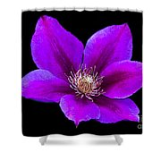 Floating Clematis Shower Curtain