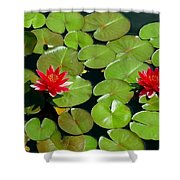 Floating Red Water Lilly Flowers On Pond Shower Curtain