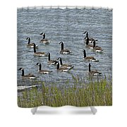 Flock Of Canada Geese   #7116 Shower Curtain