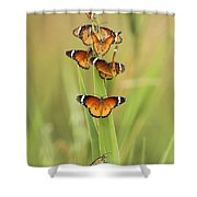 Flock Of Plain Tiger Danaus Chrysippus Shower Curtain