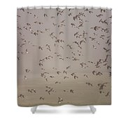 Flock Of Plovers Shower Curtain
