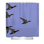 Flock Of Readheads Shower Curtain