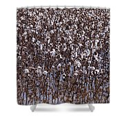 Flooded Cotton Fields Shower Curtain
