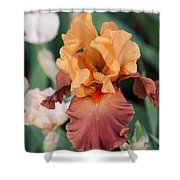 Floral 12 Shower Curtain
