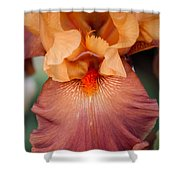 Floral 47 Shower Curtain