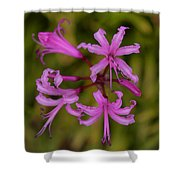 Floral Anemones Shower Curtain