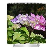 Floral Art Photography Pink Lavender Hydrangeas Shower Curtain