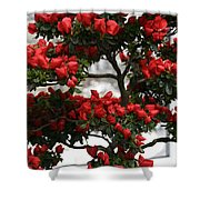 Floral Bonsai Shower Curtain