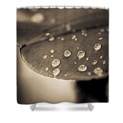 Floral Close-up Iv Shower Curtain by Marco Oliveira