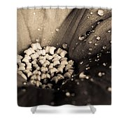 Floral Close-up V Shower Curtain