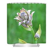 Floral Crown Shower Curtain