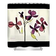 Money Plant Shower Curtain