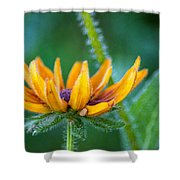 Floral Fuzz Shower Curtain
