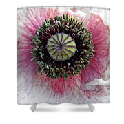 Floral Geometry Shower Curtain
