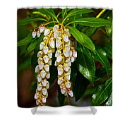 Floral Hanging Lanterns From Japan Shower Curtain