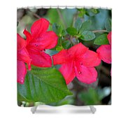 Floral Hedge Shower Curtain