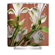 Floral Highlights Shower Curtain