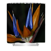 Floral Points Shower Curtain