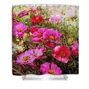 Floral Portulaca Garden Shower Curtain