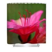 Floral Rosa Shower Curtain