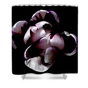 Floral Symmetry Shower Curtain by Rona Black
