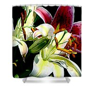 Florals In Contrast Shower Curtain