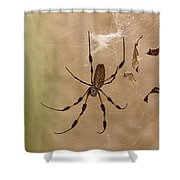 Florida Banana Spider Shower Curtain