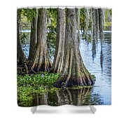 Florida Cypress Trees Shower Curtain