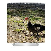 Florida Duck On Green Grass Shower Curtain