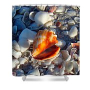 Florida Fighting Conch 1 Shower Curtain