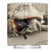 Florida Fighting Conch Shower Curtain