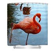 Florida Flamingo Shower Curtain