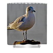Florida Gull Shower Curtain