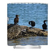 Florida Hangout Shower Curtain