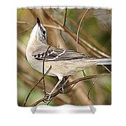 Florida Mockingbird Shower Curtain